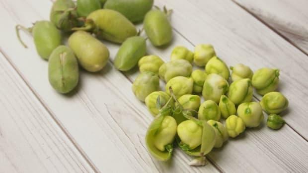 fresh garbanzo beans