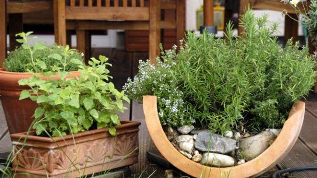 kosher-herb-garden