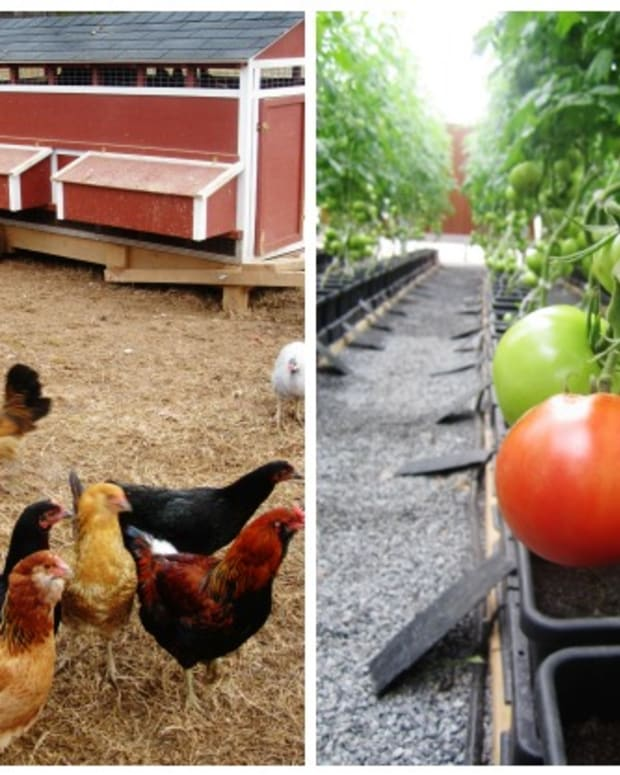 culinary sustainability
