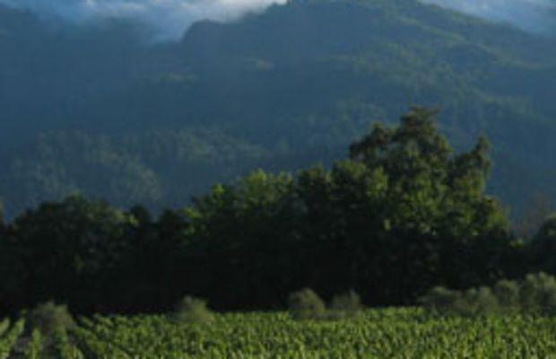 vineyardcov