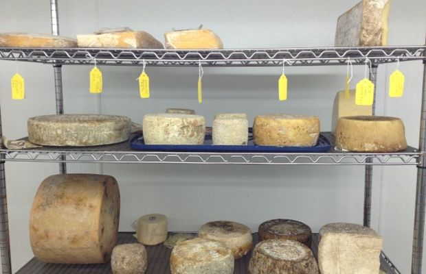the cheese guy cave