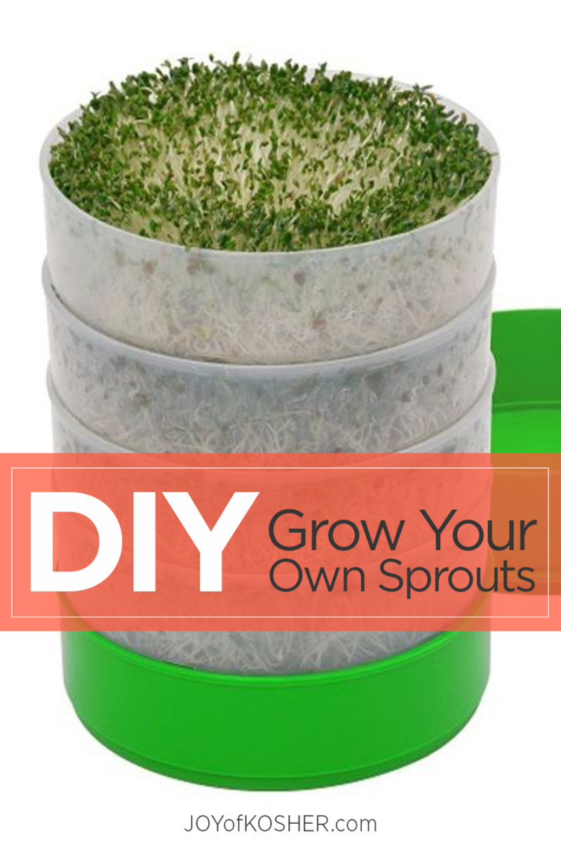 diy grow sprouts.jpg