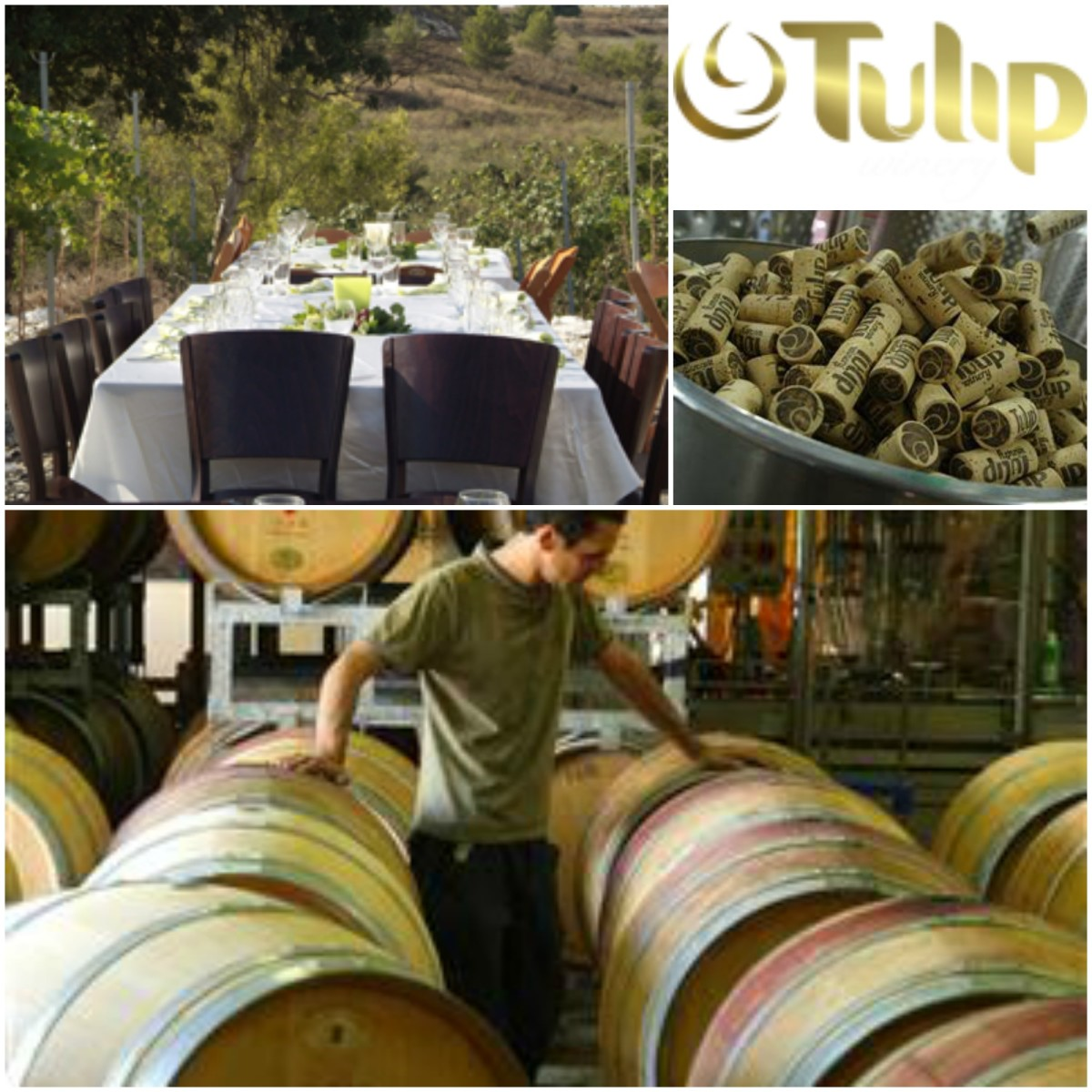 tulip winery collage