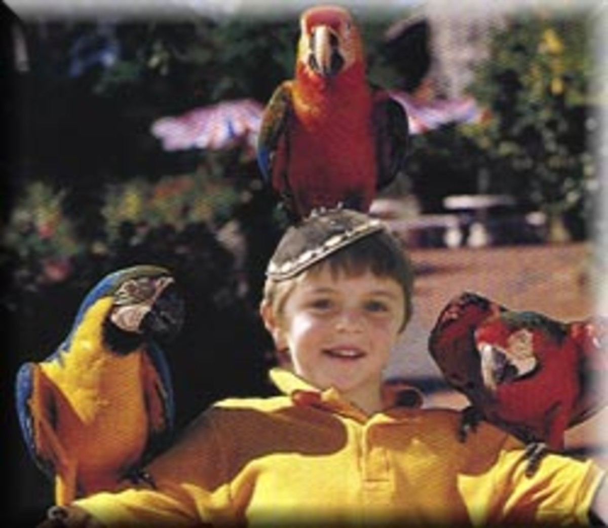 Zev Birds