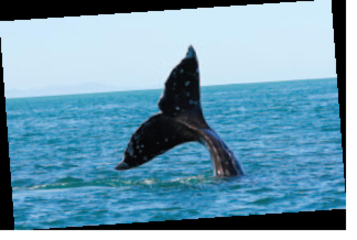 napa whale