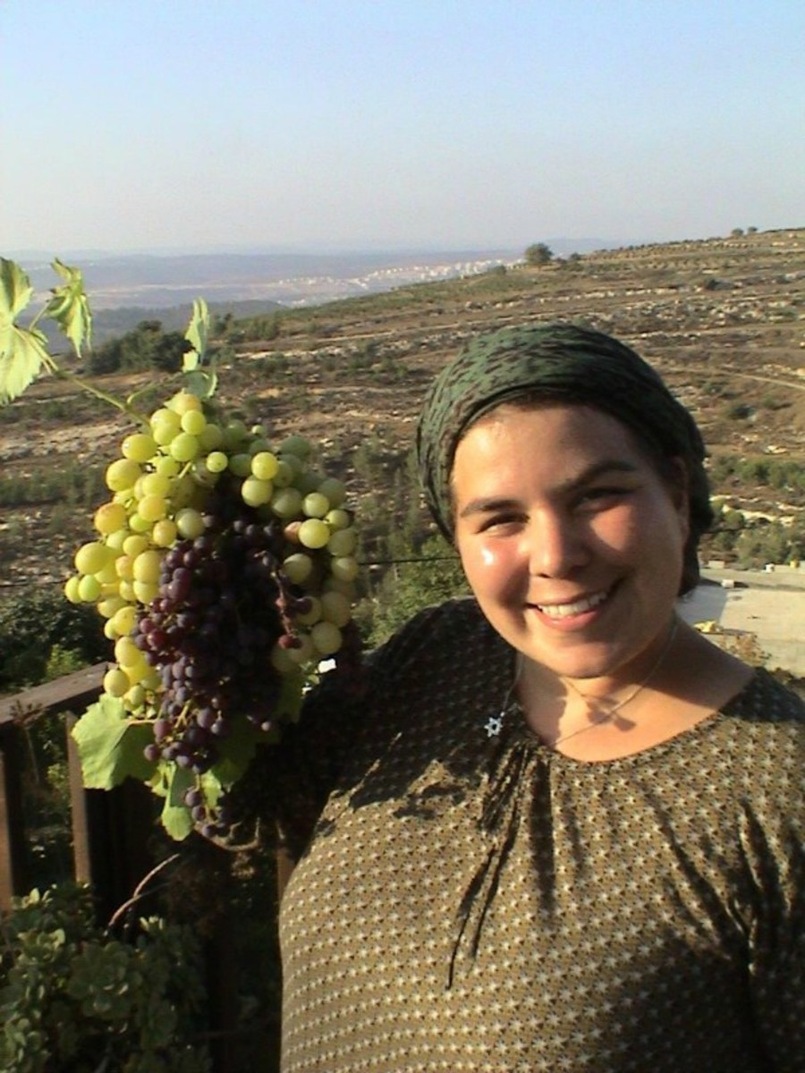 LeAnn picking grapes for Shabbat