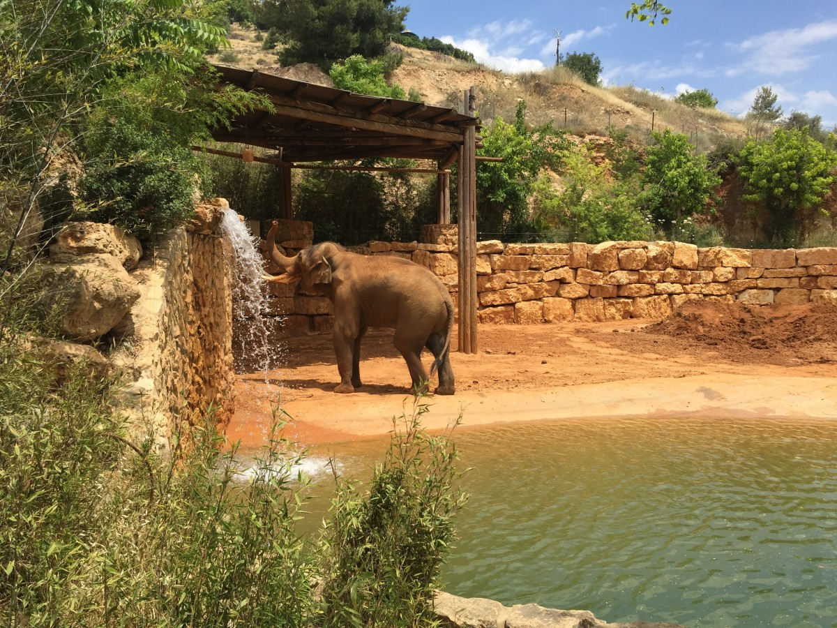 Elephant at the Biblical Zoo