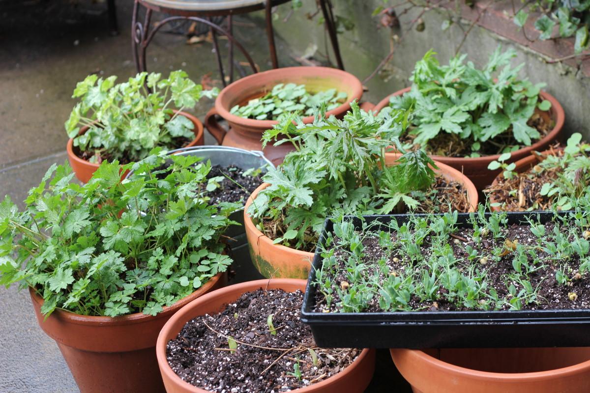 Brooklyn Foraging Garden